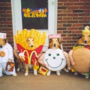 Почему собаки ненавидят Хеллоуин