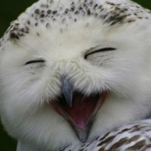 Тебе грустно? Посмотри на улыбающихся сов