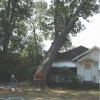 Дерево рубил