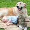 Совместимы ли домашние животные и ребенок?