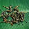 Стрекозы в кокосовом молоке